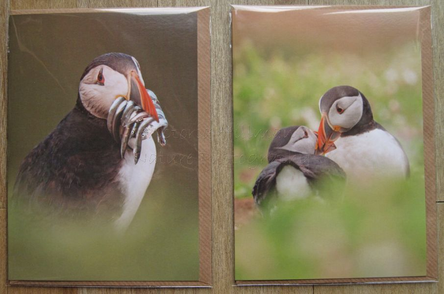 Puffin Cards