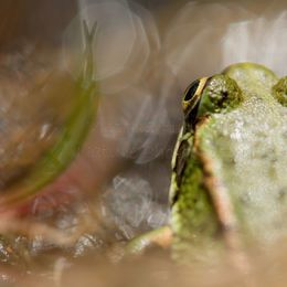 The Frog and The Springtail