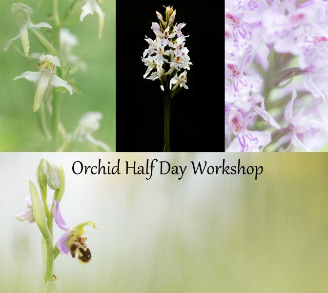 Wild Orchid Half Day Workshop
