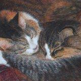 ken's Kittens