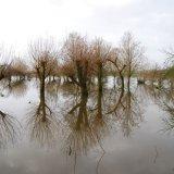 Muchelney Flooding Somerset