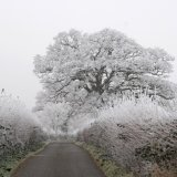 Hundry Lane Frost Somerset