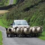 Busy Roads, West Cork