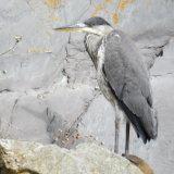 60. Corr réisc, Heron (1)