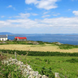 38. Diontá Dearg, Oiléan Chléire; Red Roofs; Cape Clear