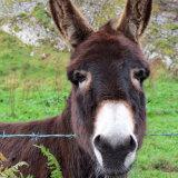 88. Donkey, West Cork