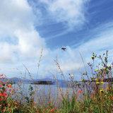 10. High Summer, Dunmanus Bay