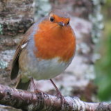 72. Spideog, Robin