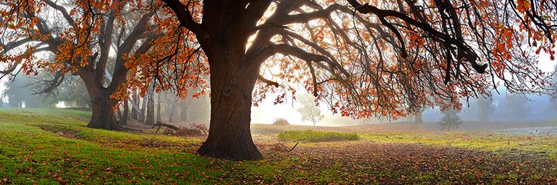 Under the Oaks