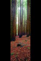 Redwoods vert
