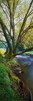 Snowy Creek vert