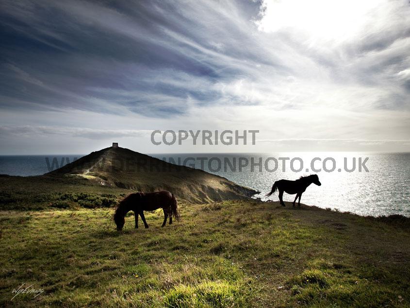 rame ponies
