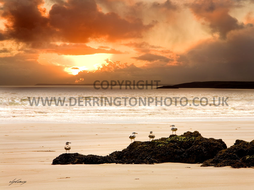 sunset-gulls