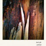 Bark Split