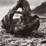 Greymouth Stump