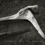 Horsestick