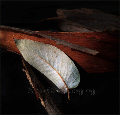 Leaf2jpg
