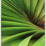 Leaf Blend