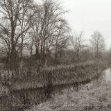 Mulwaree Ponds