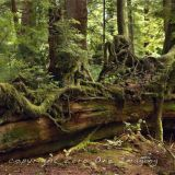 Oregon Log