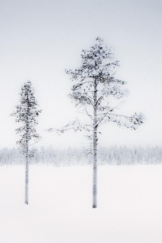 01 2 Trees by John Tilsley