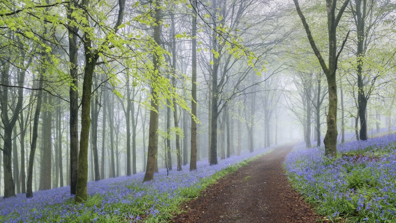 Bluebell Way by Tony Gill