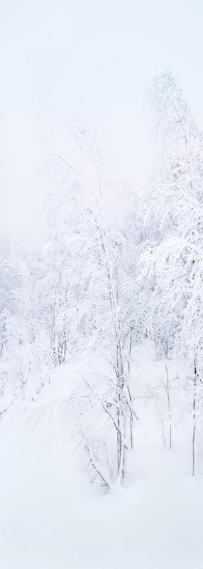 Finnish Forest by John Tilsley
