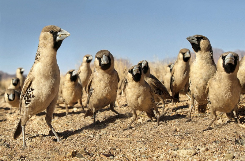 02 Weaver Birds by Lisa Bukalders LRPS