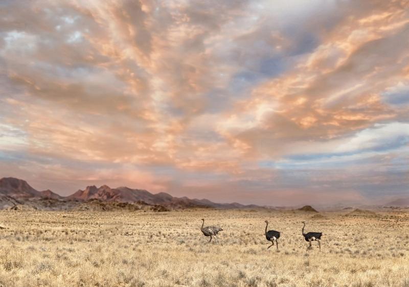 03 Namib Landscape by Lisa Bukalders LRPS