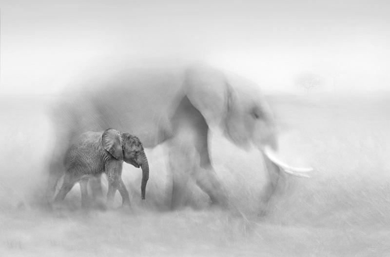 04 A Vanishing Species by Lisa Bukalders
