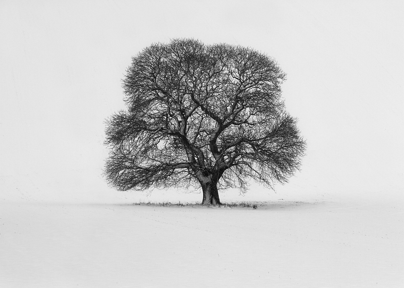 04 Solitary Tree in winter by Sid Jones