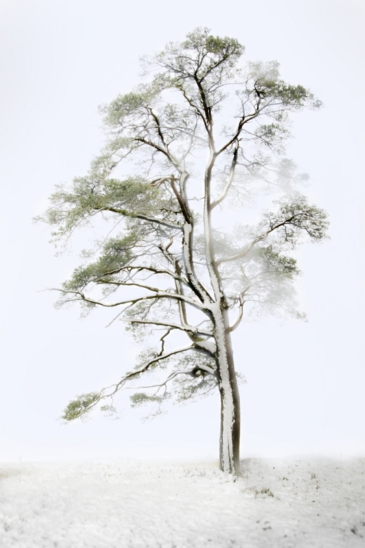 05 Lone Tree in Snowstorm by Di Tilsley