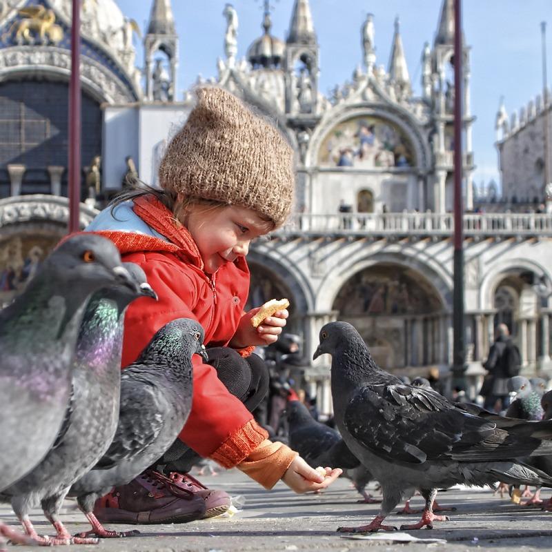 07 The Pigeon Fancier by Greg Duncan