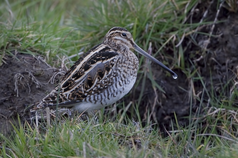 10 Snipe by Tim Downton