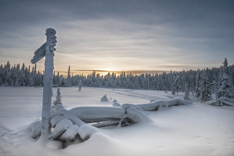 Finland at minus20 by Di Tilsley