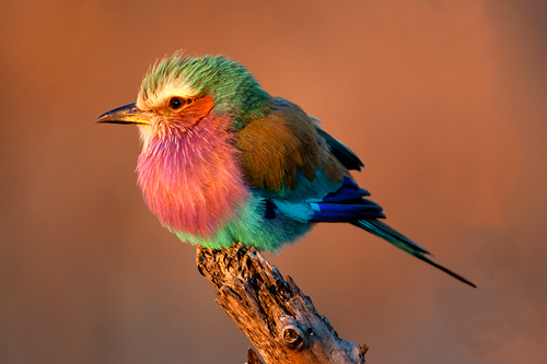 Roller at Sunset by David Cantrille