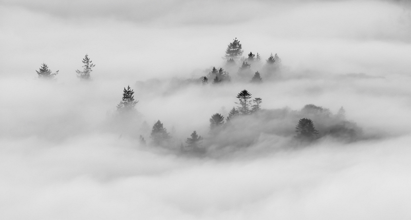 Trees in the Mist by Jane Lee