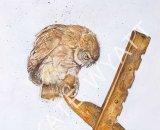 Freya - Little Owl on Farm Machinery 23x30cm