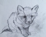Sketch of a little fox NFS
