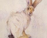 Sunngifu - Mountain Hare 40x33cm