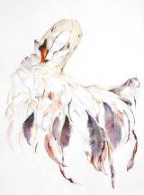 Odette Swan -  68cmx94cm