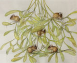 The Mistletoe Mice - 52x35.5cm