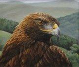 Cairnsmore Eagle