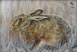 Sitting Hare 4