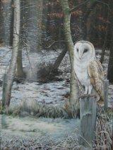 Wretham Barn Owl