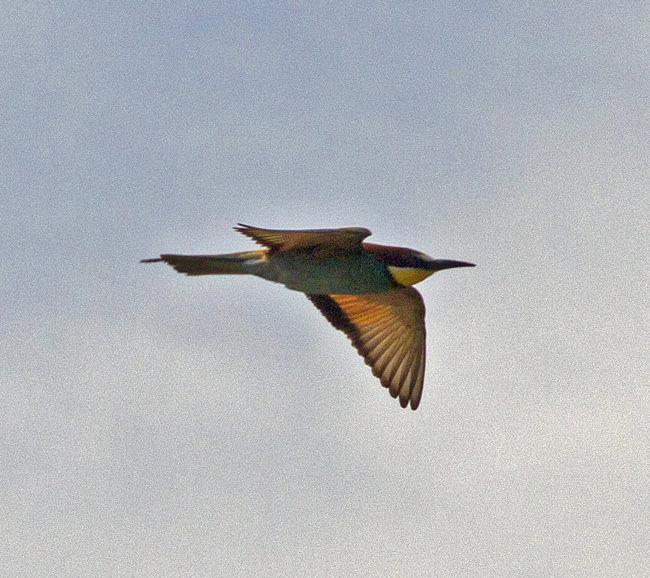 BeeEater flight