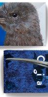 Okarito brown kiwi
