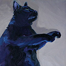 26 black cat