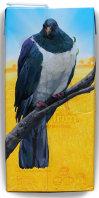 Chatham Island pigeon