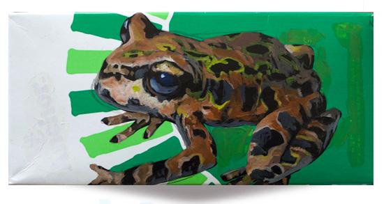 Archey's Frog